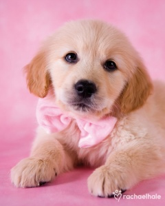 pink pup bow tie